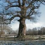 (VIDEO) Stemmen op nominaties Buitenleven Natuur & Erfgoedprijs 2012