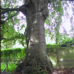 Hoorn telt 395 monumentale bomen
