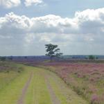 Van Vollenhoven: 'organiseer bescherming natuur op zelfde manier als monumenten'