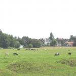Oud-Hollands landschap langs A13 zichtbaar gemaakt