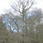 Haarlem: Treurnis om kap monumentale bomen