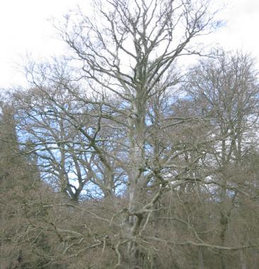 Bomen Foto: GerardM via wikimedia
