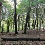 Geslaagd symposium 'Erfgoed in bos en natuur'