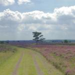 Twaalf gemeenten genomineerd voor landschapsprijs