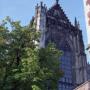Bomen Domplein verhuizen vanwege archeologie