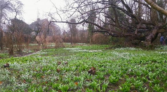 Foto Bosma's tuin Stiens op 9 maart 2013