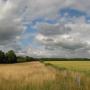 Twintig procent landschapselementen bedreigd