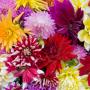 'Het boerenerf staat in bloei'