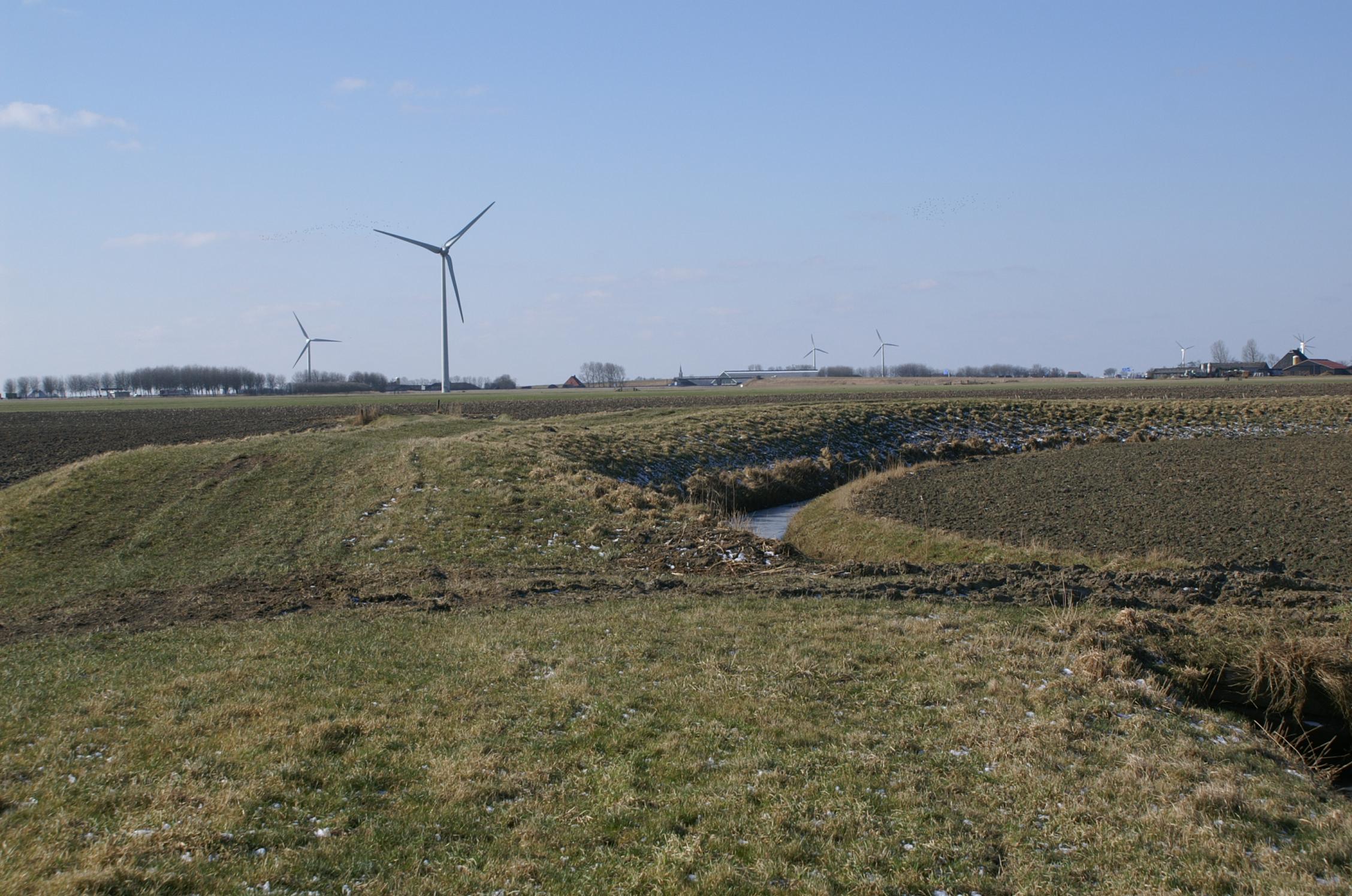 Dezemiddeleeuwse  dijk wordt bedreigd (verzakking, vergraving, gebrek aan onderhoud). Hier kun je natuur en cultuurdoelen dienen. Dijk Pingjumer Gulden Halsband, Pingjum Friesland. Foto: Sjolle Wieringa
