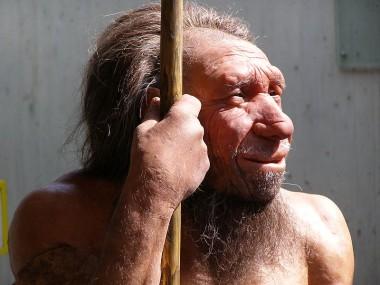 Neanderthaler -Reconstructie in het Neaderthaler Museum