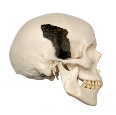 Het schedelfragment van de zogenaamde Maasvlaktemens foto: RCE