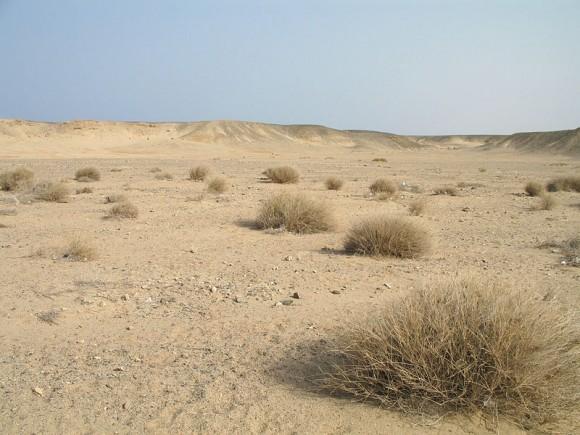Woestijn bij Marsa Mubarak (Marsa Alam, Egypte). Foto: Marc Ryckaert