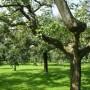 Nieuwe particuliere fruitboomgaarden in Gelderland