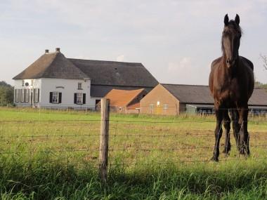 T-boerderij in Overasselt. Foto: Havang(nl)
