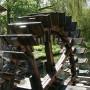 Watermolens zorgden voor uitsterven zalm in Nederland