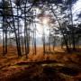 Dropping naar mystieke wereld Weerter Urnenvelden
