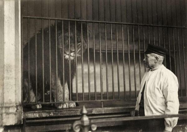 Roofdierengalerij, Artis Foto: onbekend via geheugenvannederland