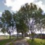 Heemschut maakt bezwaar tegen kap van bomen in Tholen