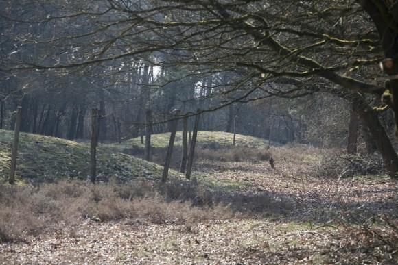 Grafheuvels met paalkransen in Veldhoven Foto: RCE