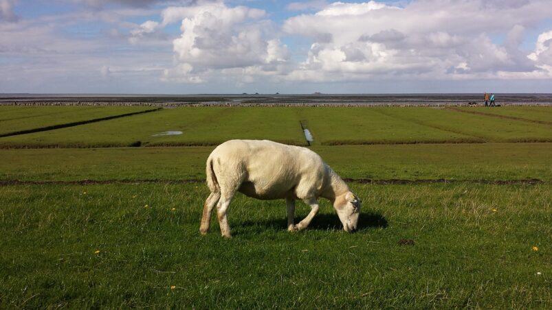 Weiland in Noord-Friesland