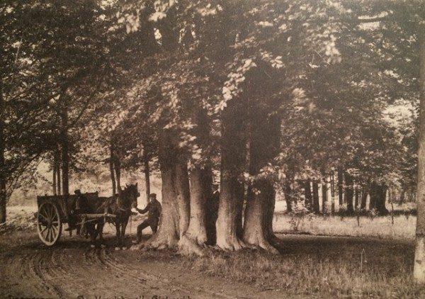Monumentale bomen Oisterwijk Foto: Marnix Versteegh via Oisterwijk Nieuws