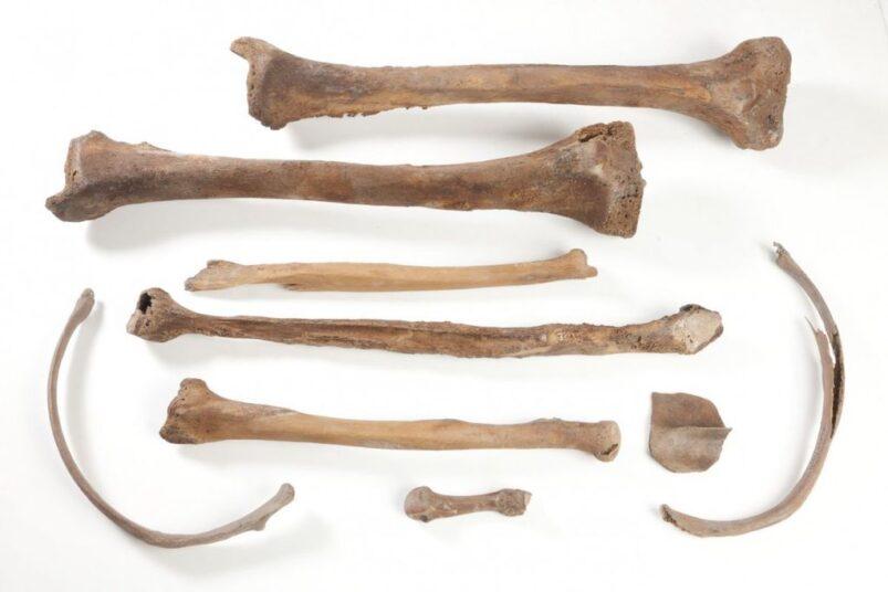 9 botten van menselijk skelet