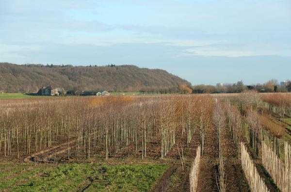 Ook Utrechts landschap: de Grebbeberg. Foto wikipedia
