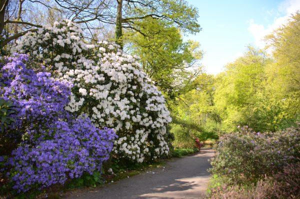Belmonte Arboretum op de Wageningse Berg