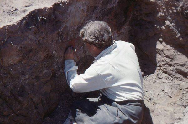 James Mellaart onderzoekt een muurschildering in Çatalhöyük