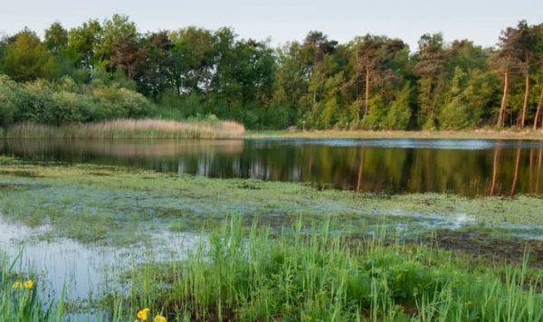 Het Rozenven op landgoed Visdonk bij Roosendaal