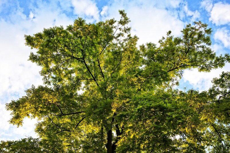 Referentiebeeld: boomkruin