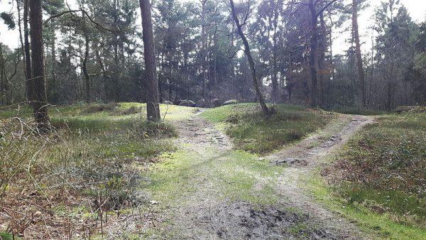 Hunebed D31 in het Hunzebos