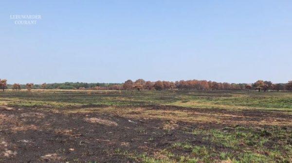Het afgebrande stuk natuurgebied in het Drents-Friese Wold