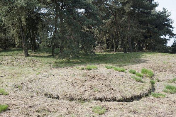 Een grafheuvel op de Boshoverheide in Weert