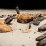 Bezoek het scheepswrak van de Rooswijk met 3D virtuele tour