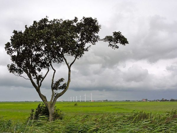 Veenweidegebied in Zuidwest-Friesland