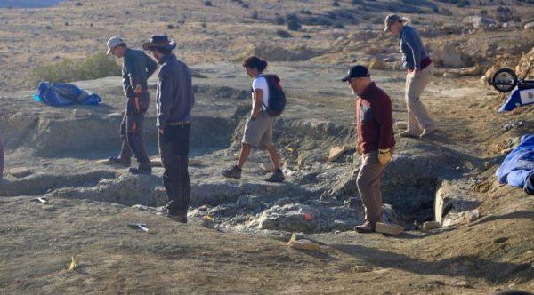 Opgraving op de Jurassic Mile