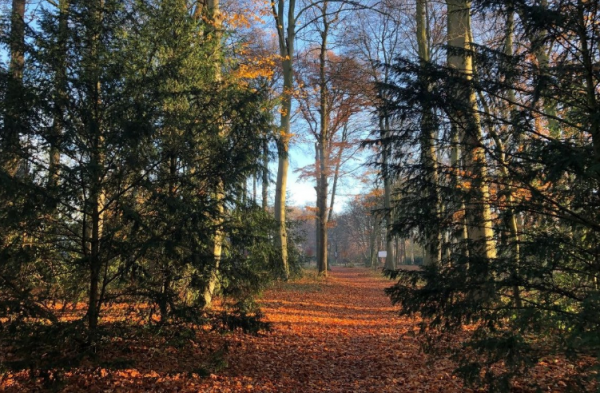 Park Voordaan
