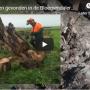 Video: Eeuwenoude veeneiken aangetroffen in Weesp