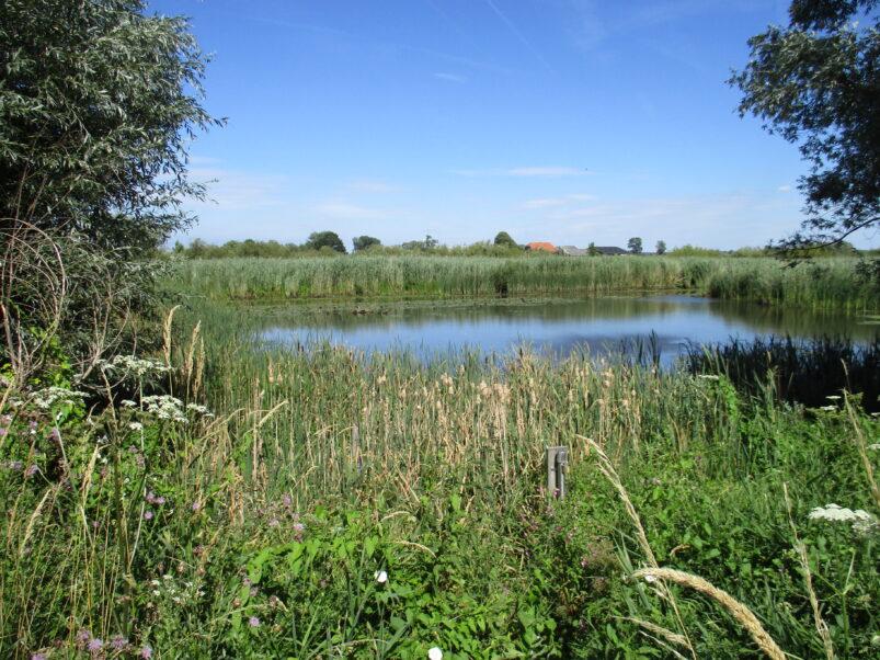 Natuurgebied De Rijnstrangen