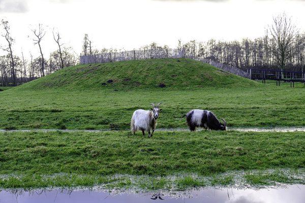 Gereconstrueerde burchtheuvel in Eelde.